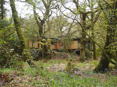 Approach to a timber clad building through the woods with bluebells in bloom